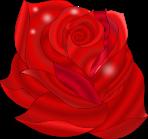 Rose Sparkly